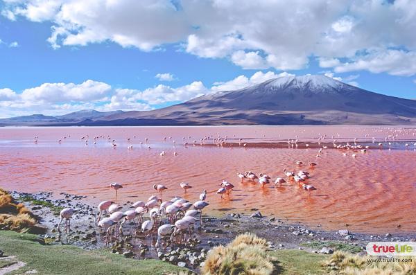 laguna-colorada-lake
