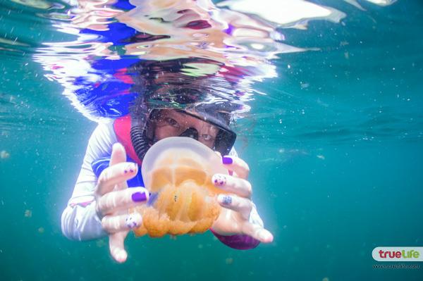 jellyfish-lake-palau-3