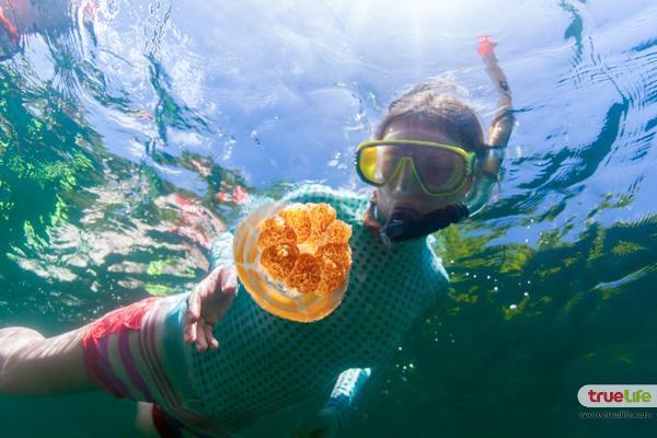 jellyfish-lake-palau-4