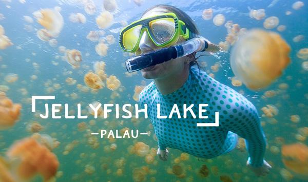 jellyfish-lake-palau-tt