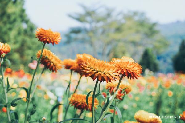 Paper flowers field