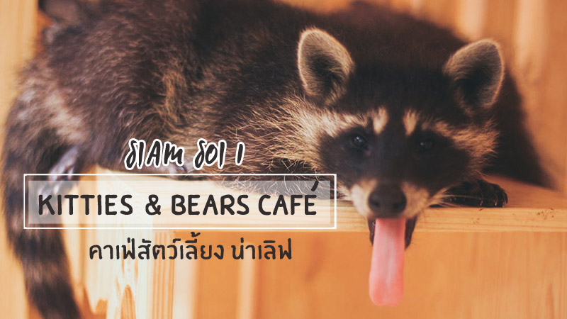 Kitties & Bears Cafe สยาม à¸x8bอย 1 à¸x84าà¹x80à¸x9fà¹x88สัà¸x95วà¹x8cà¹x80ลีà¹x89ยà¸x87 à¸x97ีà¹x88à¹x83หà¸x8dà¹x88à¸x97ีสุà¸x94à¹x83à¸x99à¸x81รุà¸x87à¹x80à¸x97à¸x9eฯ