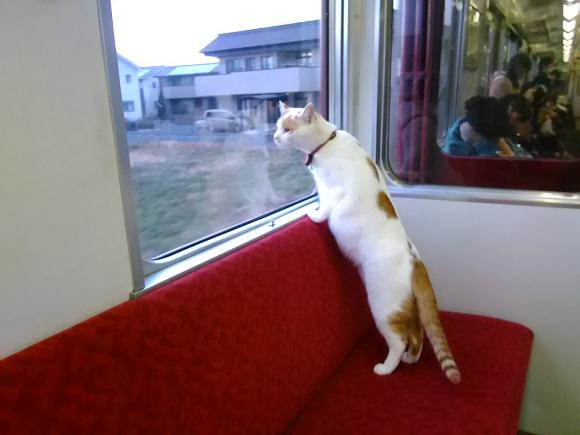 Yoro Railway รถไฟญี่ปุ่น