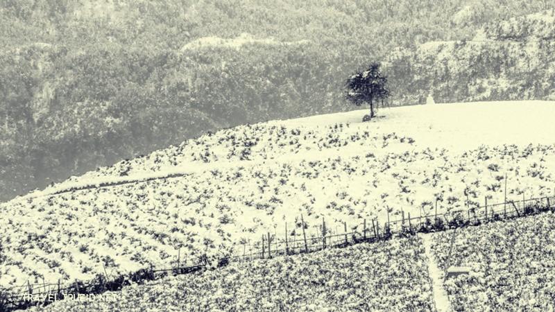 Vietnam Winter