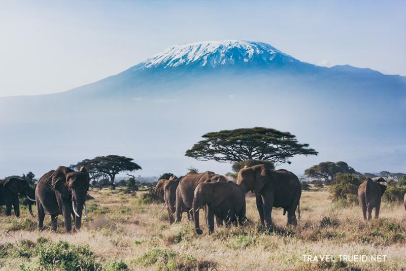 49 Mt.Kilimanjaro