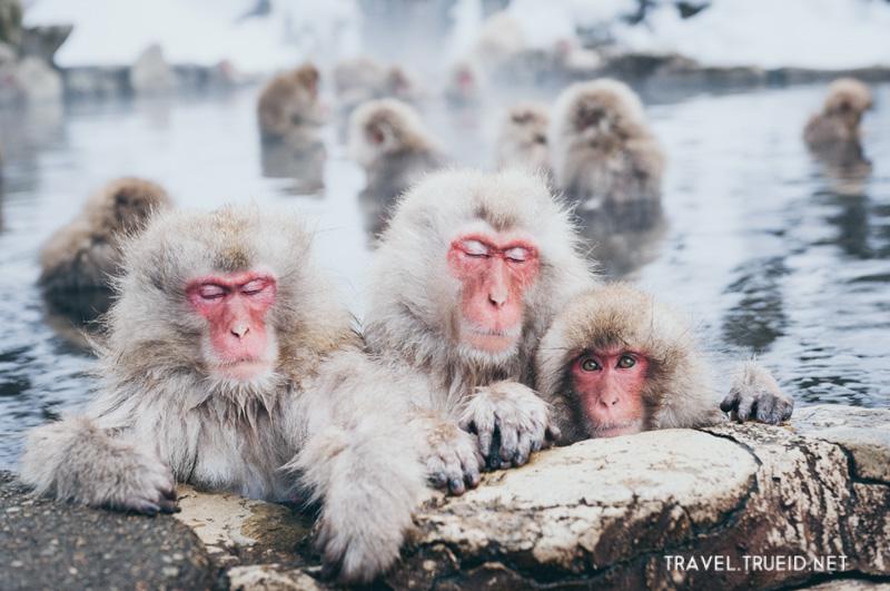 42 Jigokudani Monkey Park