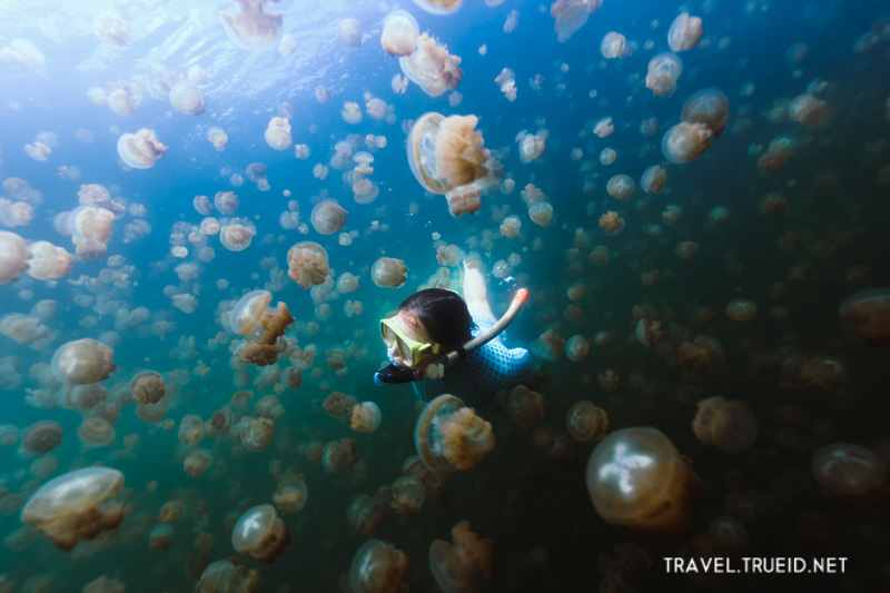 Beautiful Place Jellyfish Lake