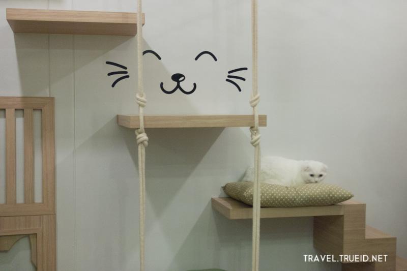 โรงแรมแมว Neko Luxury Cat Hotel สุดหรู ห้องพักในฝันสำหรับน้องเหมียว