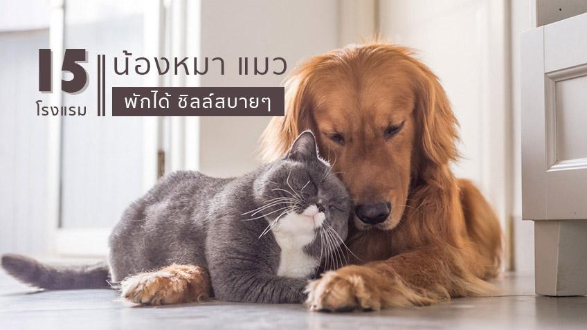 15 โรงแรม หมา แมว พักได้ ชิลล์สบายๆ ทั้งเจ้าของยันน้องหมา