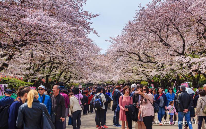 10 จุดยอดฮิต ชมซากุระ ในญี่ปุ่น สวยตราตรึง ที่อยากให้ทุกคนไปดู