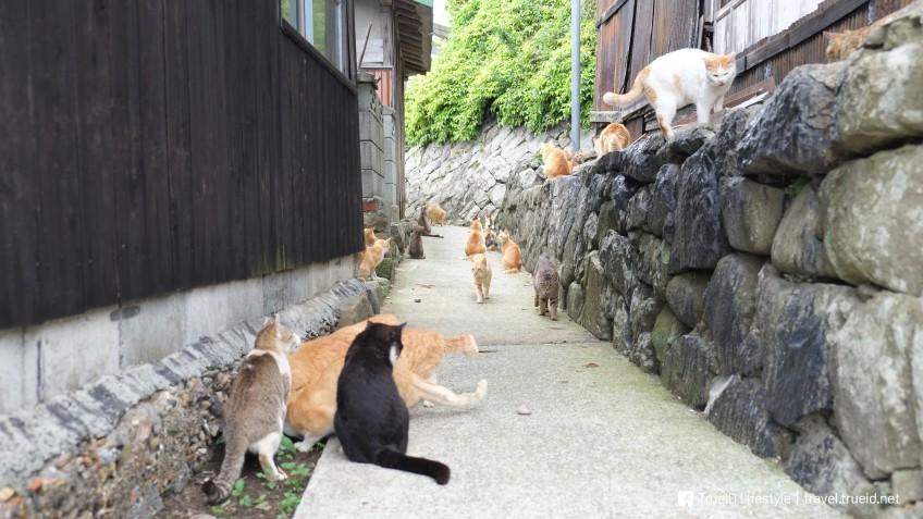 เกาะแมว Aoshima