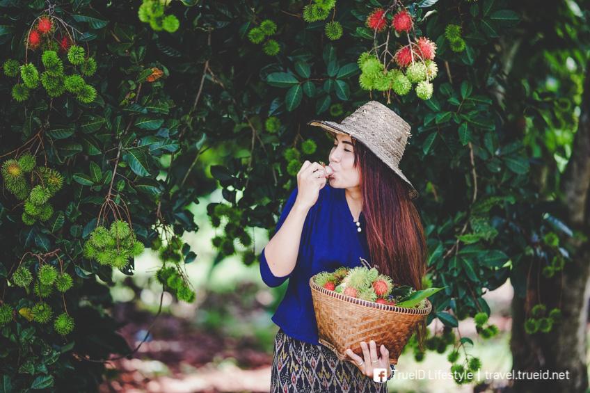อัพเดท 20 สวนผลไม้ ระยอง จันทบุรี ตราด บุฟเฟ่ต์ผลไม้เด็ดจากต้น อร่อยทุกไร่ ชิมไปทุกสวน