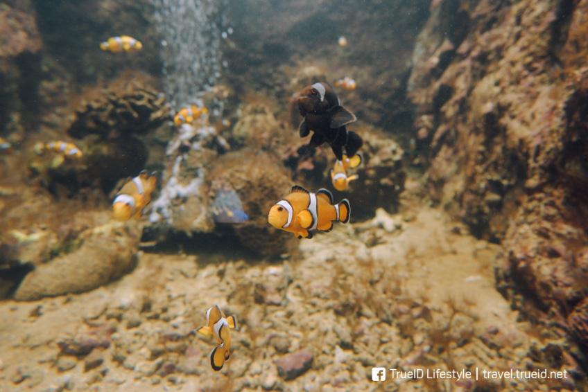 ศูนย์อนุรักษ์พันธุ์เต่าทะเล สัตหีบ