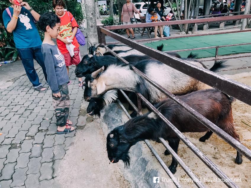 เขาดิน สวนสัตว์ดุสิต เที่ยวกรุงเทพ