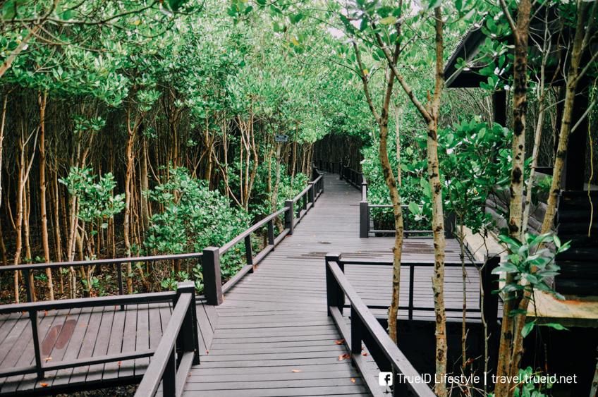 ป่าชายเลนสิรินาถราชินี ปราณบุรี พระราชินี โครงการพระราชดำริ