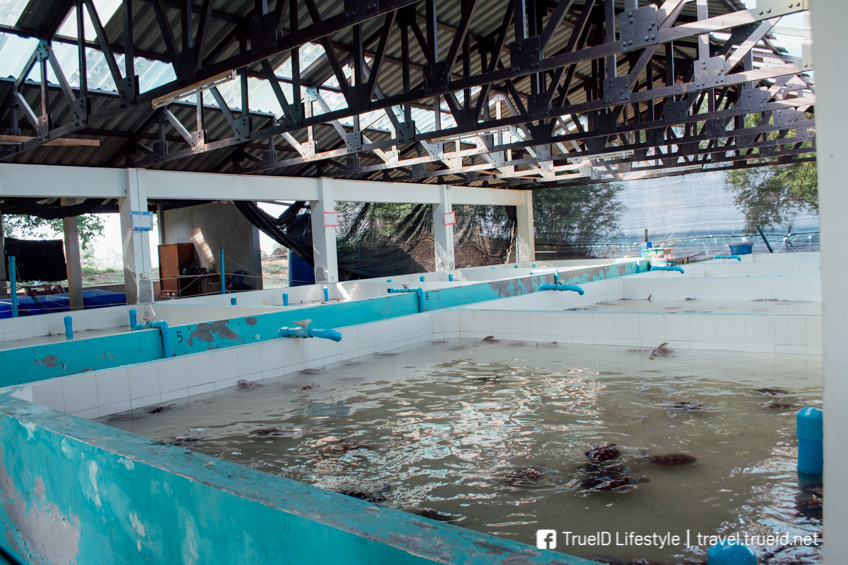 ศูนย์อนุรักษ์พันธุ์เต่าทะเล เกาะมันใน