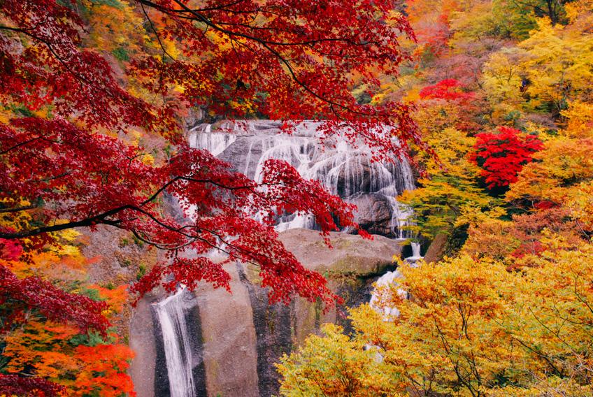 ใบไม้เปลี่ยนสี อิบารากิ ญี่ปุ่น