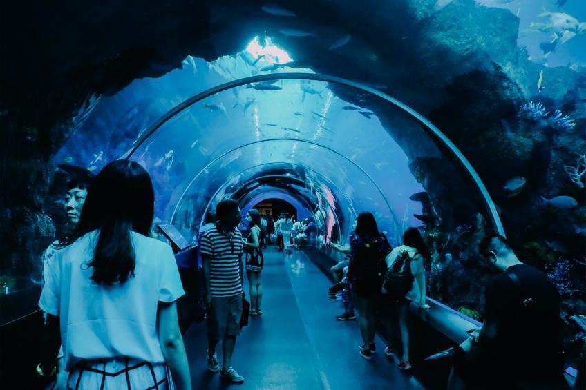 S.E.A. Aquarium สิงคโปร์