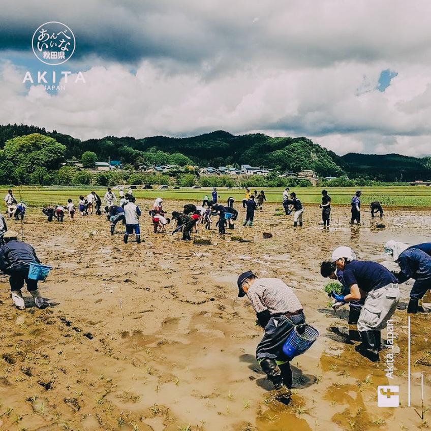 เที่ยวญี่ปุ่น อากิตะ TAMPO ART Akita