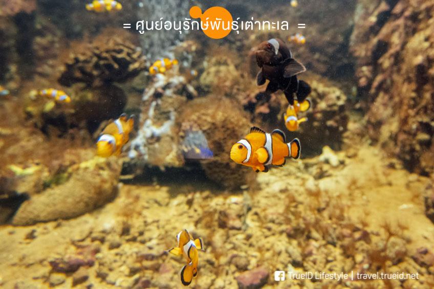 เต่าทะเลสัตหีบ กล้องฟูจิ