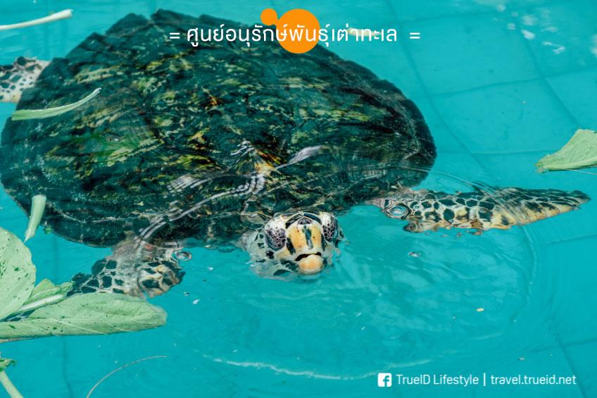 ศูนย์อนุรักษ์เต่าทะเล กล้องเซลฟี่