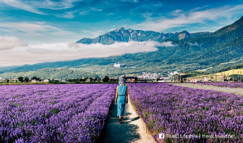 ฟุราโนะ ฮอกไกโด เที่ยวญี่ปุ่นเมืองไหน เท่าไหร่บ้าง ไปเที่ยวช่วงไหนถึงจะดี ?