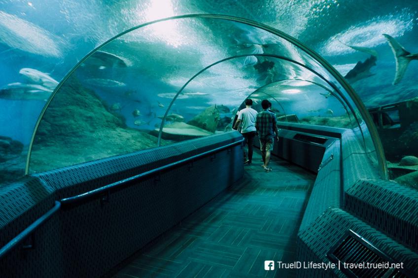 เที่ยวสัตหีบ งบน้อย Under Water World พัทยา