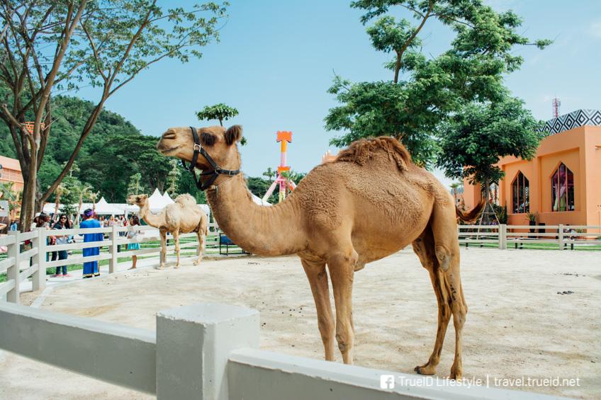 Camel Republic ชะอำ เที่ยวใกล้กรุงเทพ