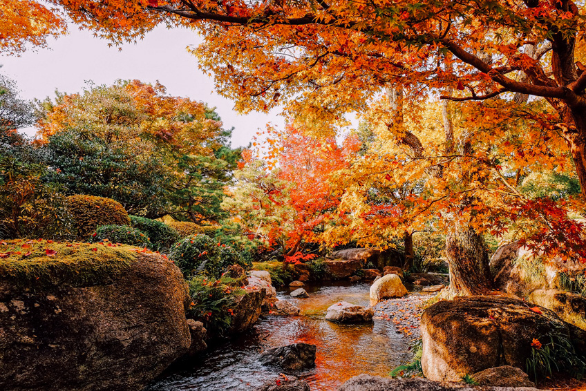 Autumn leaves, Fukuoka ใบไม้เปลี่ยนสี