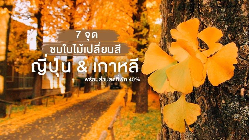ใบไม้เปลี่ยนสี เกาหลี ญี่ปุ่น