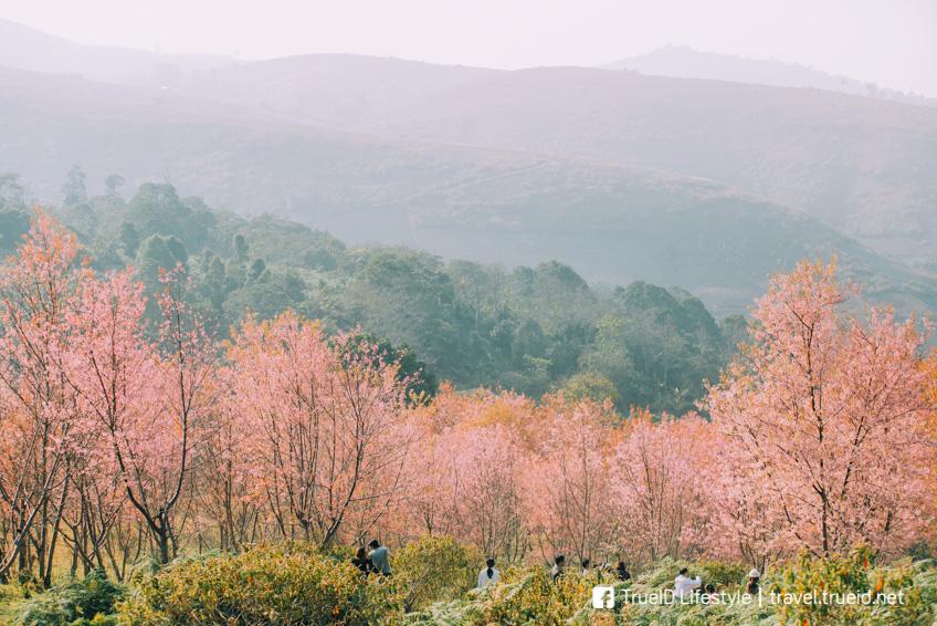 ภูลมโล ทุ่งดอกไม้ ถ่ายรูปสวย