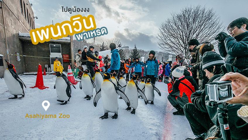 Asahiyama Zoo พาเหรด เพนกวิน