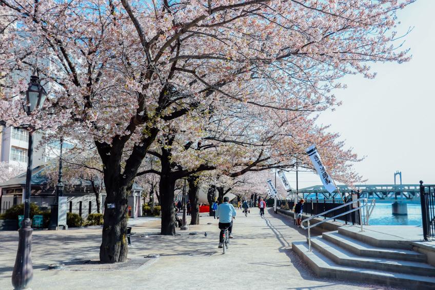 Sumida Park เที่ยวโตเกียว