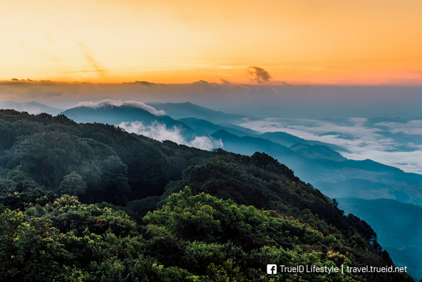Don_Lino Phuket / Shutterstock.com