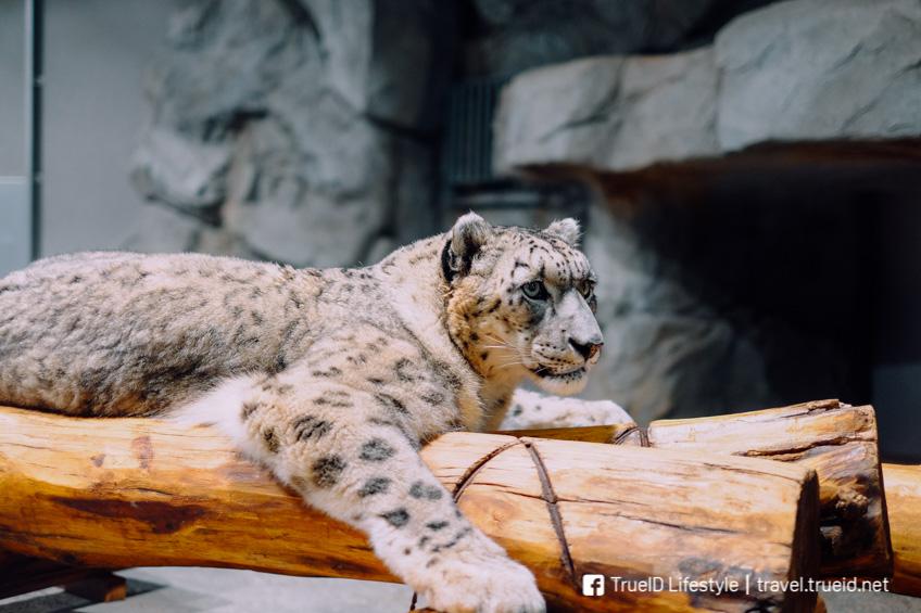 Maruyama Zoo ซัปโปโร