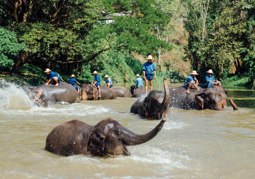 ศูนย์อนุรักษ์ช้างไทย เที่ยวลำปาง