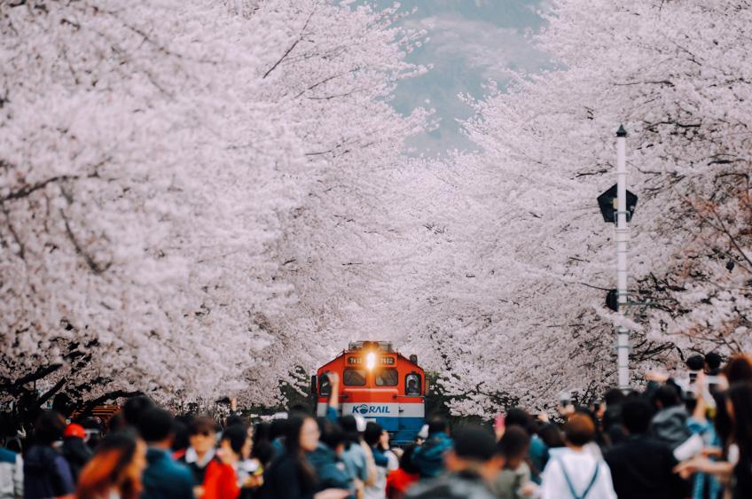 ทางรถไฟ ซากุระคยองฮวา  เกาหลี