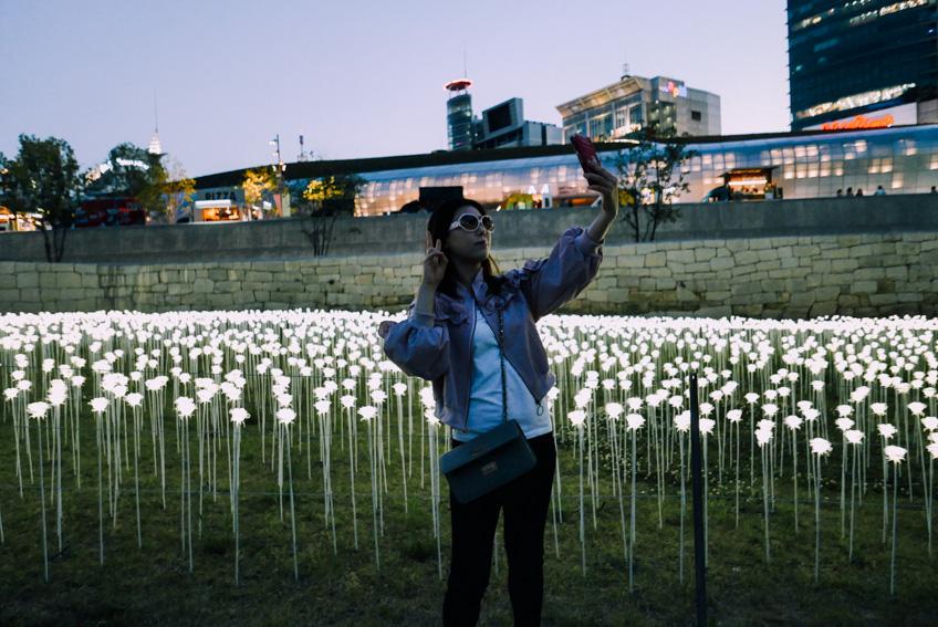 เที่ยวเกาหลี DDP LED Rose Garden