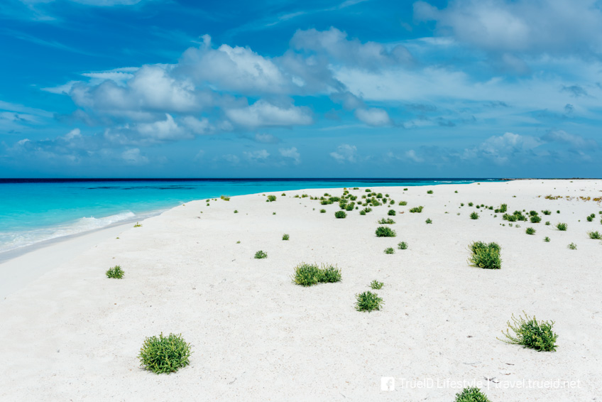 Cayo de Agua ชายหาดที่สวยที่สุดในโลก