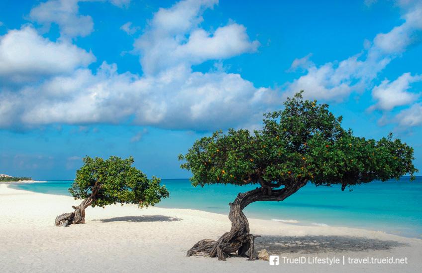 Eagle Beach ชายหาดที่ดีที่สุดในโลก