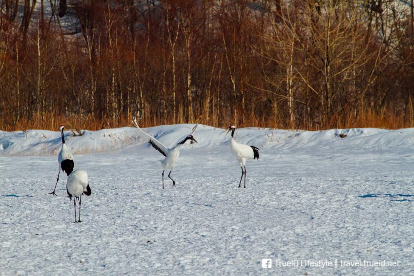 เที่ยวญี่ปุ่นหน้าหนาว Kushiro Shitsugen National Park