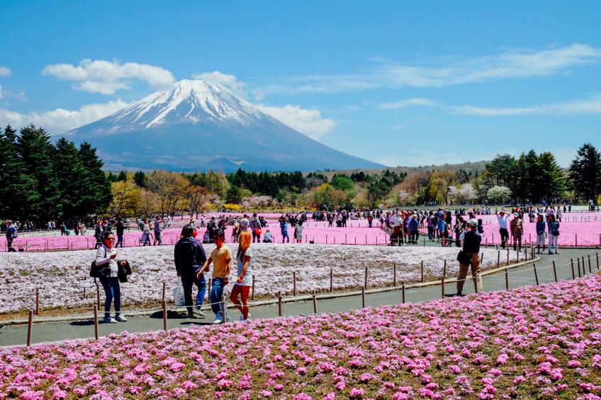 จุดถ่ายรูปสวย ฟูจิ Fuji Shibazakura Festival