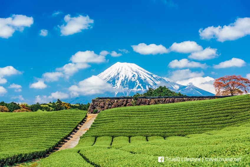Shizuoka จุดถ่ายรูปสวย ฟูจิ
