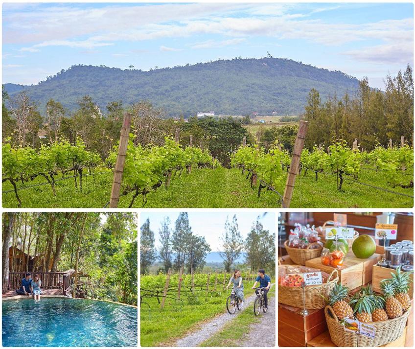Village Farm & Winery ปากช่อง วังน้ำเขียว เที่ยวใกล้กรุงเทพ