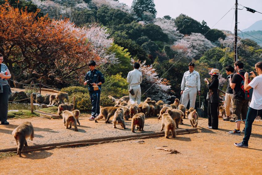 ที่เที่ยวเกียวโต Iwatayama Monkey Park