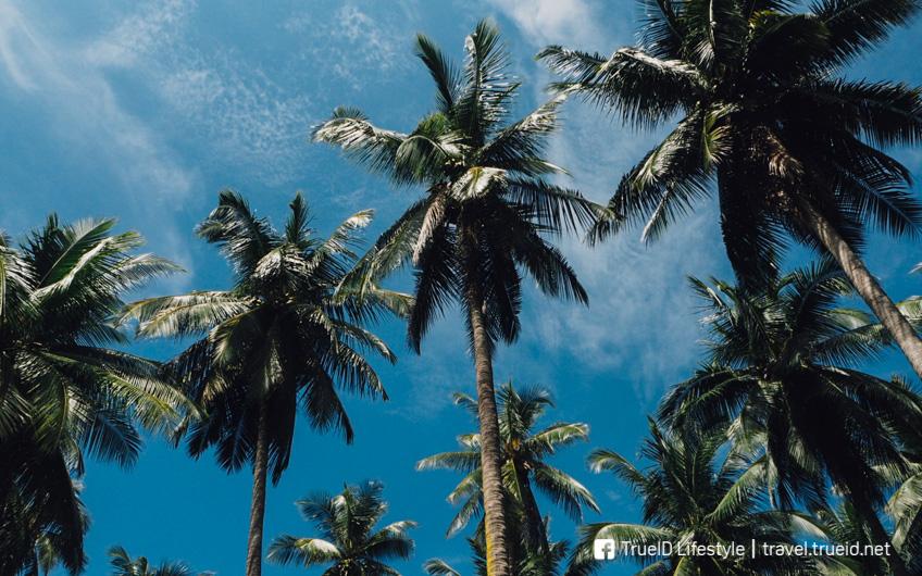 เที่ยวอุโมงค์ป่าโกงกาง เกาะยาวใหญ่ พังงา