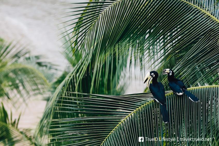 เกาะยาวน้อย เที่ยวพังงา เกาะสวยในไทย