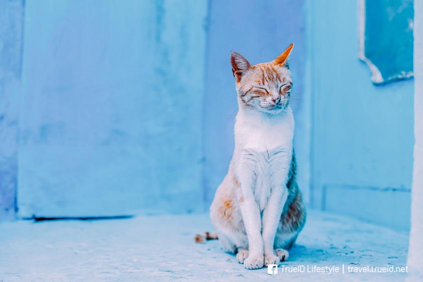 เชฟชาอูน เมืองสีฟ้า