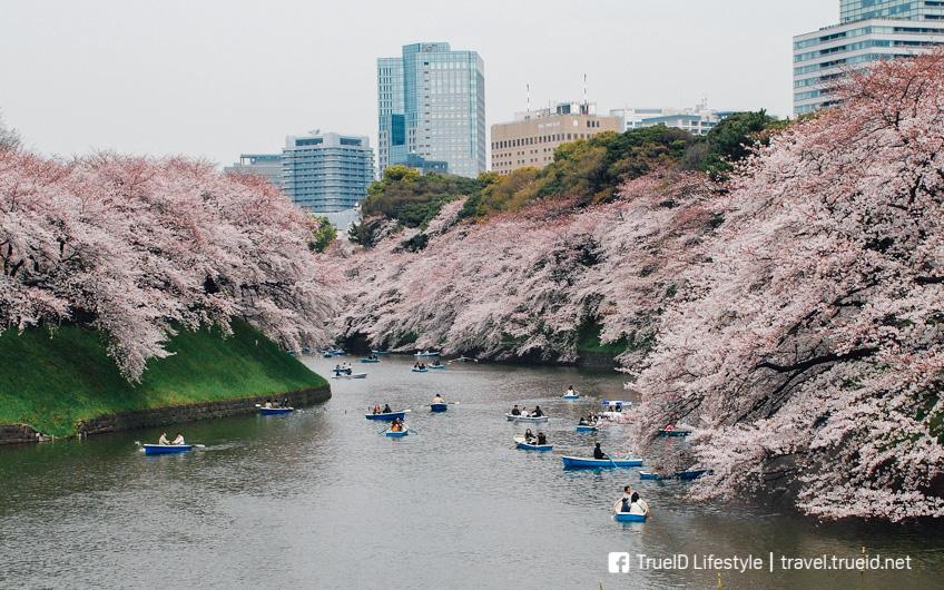 พยากรณ์ซากุระ ญี่ปุ่น 2019 ฤดูใบไม้ผลิ