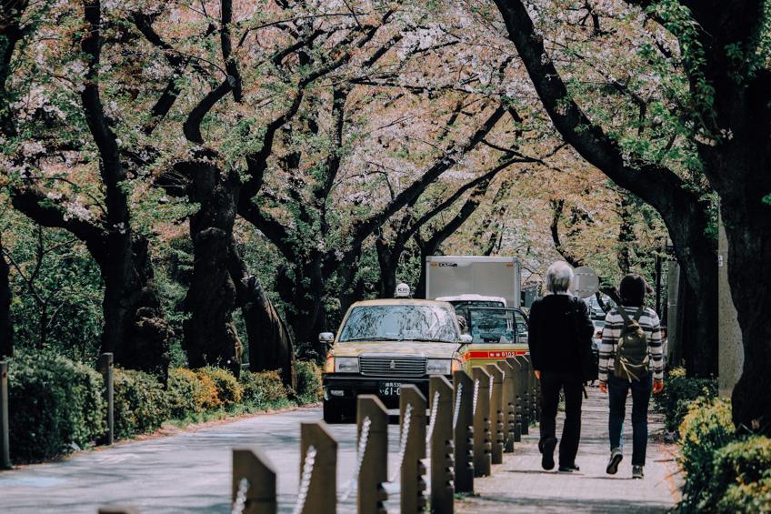 จุดชมซากุระที่โตเกียว Aoyama Cemetery